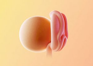 هفته اول و دوم بارداری